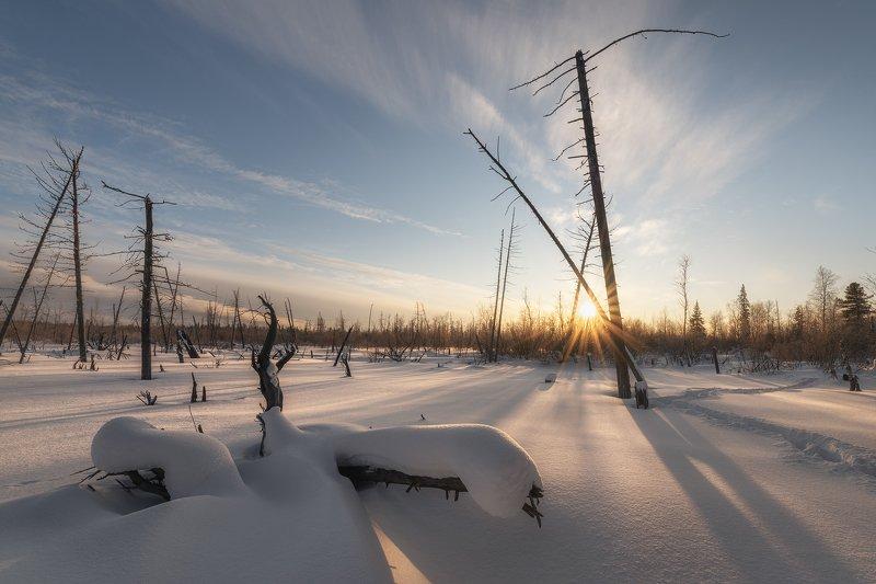 ноябрьск, янао, ямал, зима, снег, деревья, небо, облака, природа, пейзаж, солнце, seal, altushkin.name Уходящий деньphoto preview