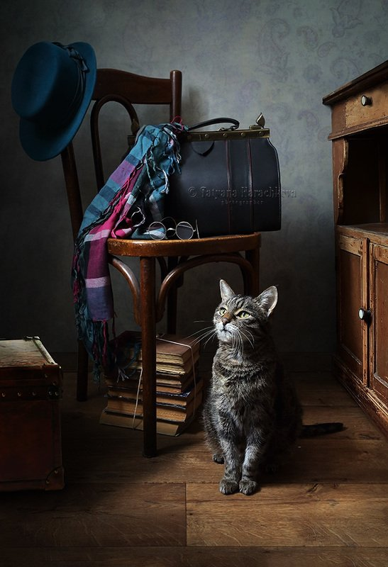натюрморт, стул, кот, книги Возвращение.photo preview