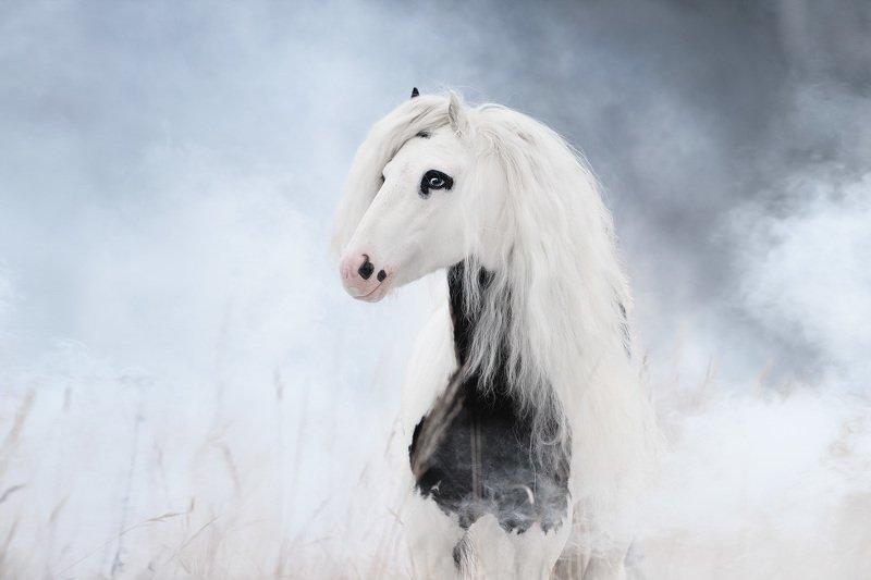 лошадь, туман, дым, пони ***photo preview