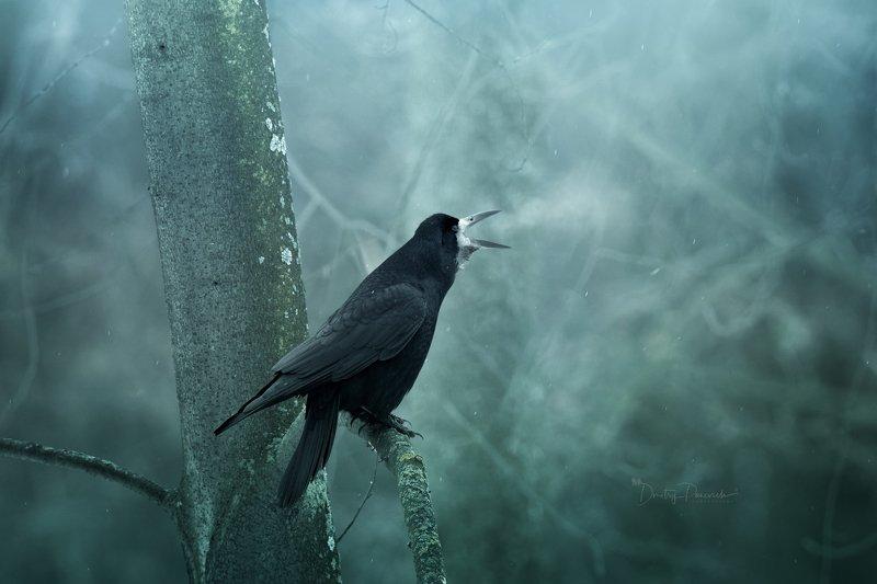 природа, лес, животные, птицы Предвестие весныphoto preview