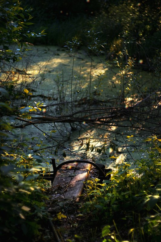 swamp, болото,природа Swamp behind the housephoto preview