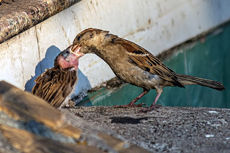 baby bird care, baby, birds, care, nature, animals, eating, outdoor, time, National Geographic, photo, beautiful Baby bird carephoto preview