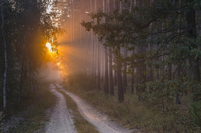 солнце,лес,пейзаж,рассвет,свет,природа,фотограф,фотография,украина,гадяч,сергей корнев,искусство,ракурс,композиция,свет,цвет,утро Поток светаphoto preview