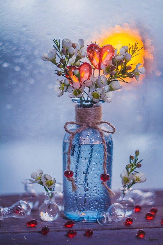 боке, закат, цветы, сердце, красный, брызги, натюрморт, гелиос Леденцыphoto preview