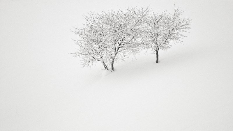 dream,landscape,alexandrucrisan,nature,scenery,countryside,far,away,romania,dreamland,magic,sound,lonely,myromania,forest,trees,winds,hill,tree,white,poem,haiku,minimalism,minimal,winterscape,cold,freeze,breeze,panoramic,wintertale,for,mist,skin,whiteveil Stay togetherphoto preview