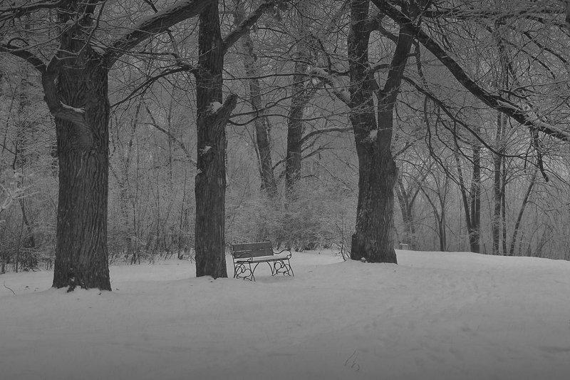 зима, снег, сад, , скамейка в зимнем садуphoto preview