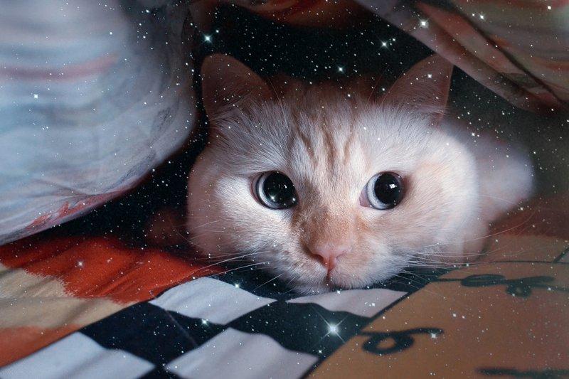 cat,british,cute,white , кот, британец, животные, минск, беларусь photo preview