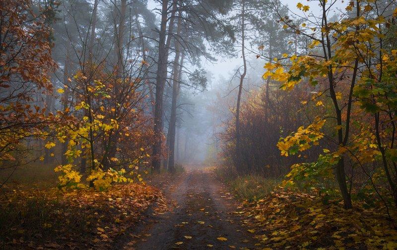 лес, осень, октябрь, утро, туман Осенний лес наполнился туманомphoto preview