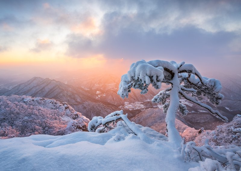 mountains,peak,hiking,winter,light,colors,colorful,snow,cold,pine,tree Frozen ghostphoto preview