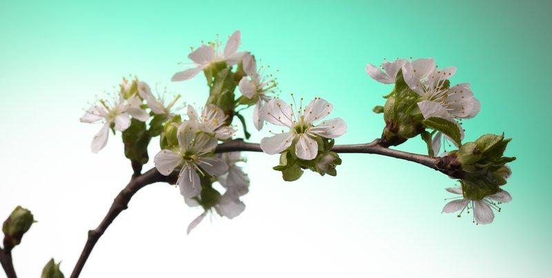 швеция Весна идетphoto preview