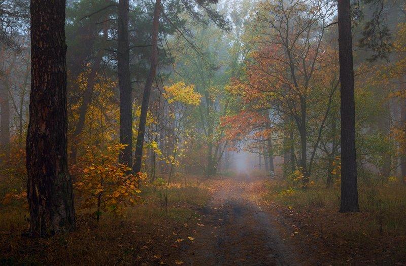 лес, осень, октябрь, утро, рассвет, туман Октябрьphoto preview