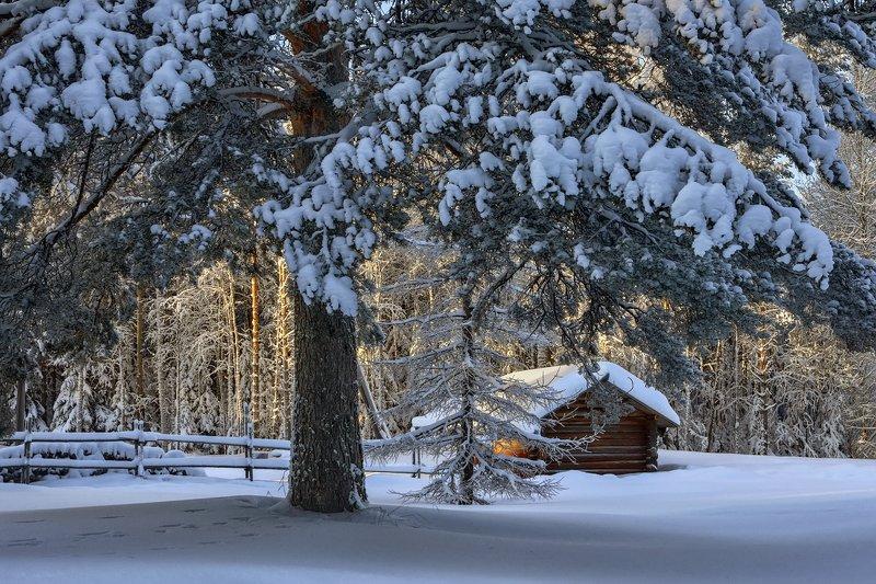 зима лес снег иней мороз солнце деревья сугробы деревня банька дрова изгородь снежные гроздья Снежные гроздьяphoto preview