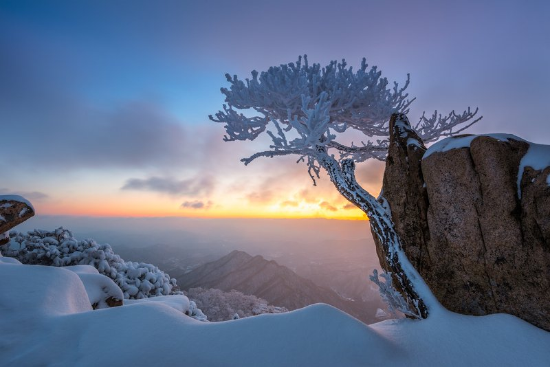 mountains,peak,hiking,winter,light,,snow,cold,pine,tree,alone Frozen wandphoto preview