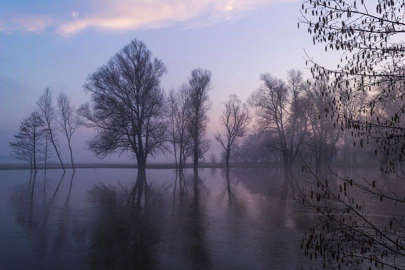 весна,паводок,утро,рассвет,пейзаж,природа,дерево,украина,гадяч,сергей корнев,красота,фотограф,пейзажная фотография,колорит,искусство,композиция Паводок на реке Пселphoto preview