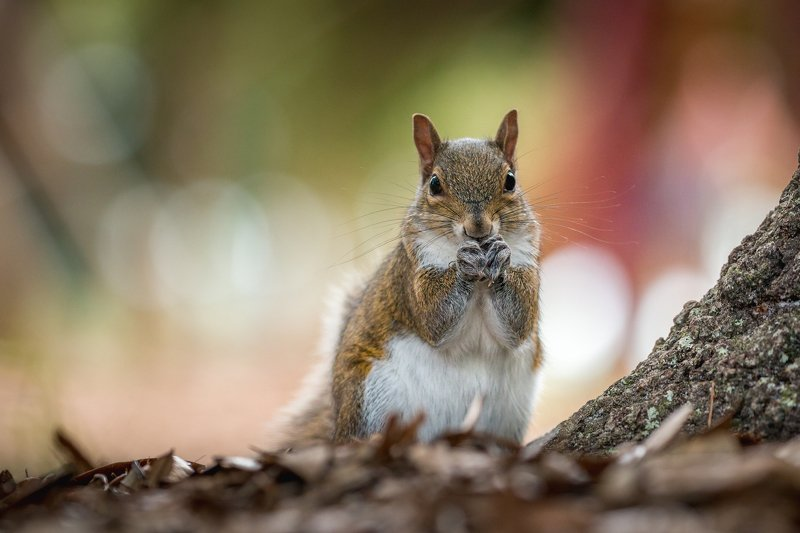 A Squirrel!photo preview
