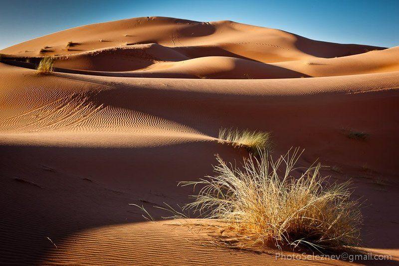 travel, desert, morocco, dune, sand Эрг Шеббиphoto preview