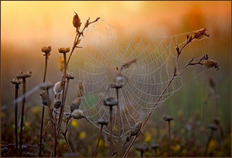 лето,природа,утро,роса, Август.photo preview