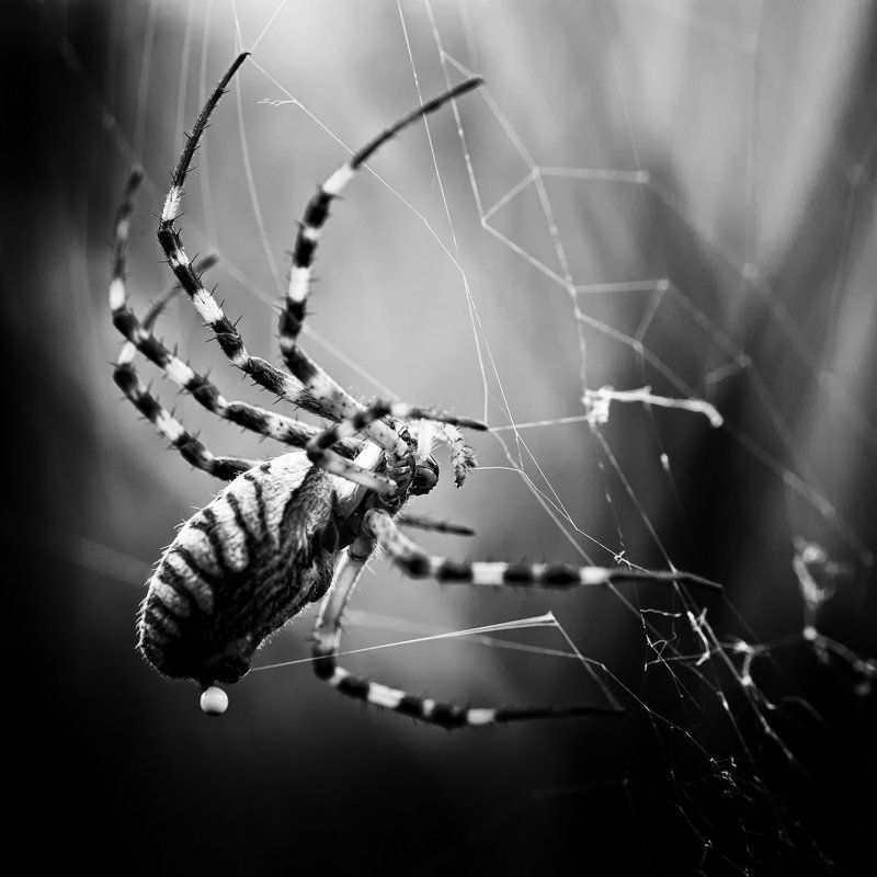 spiderphoto preview