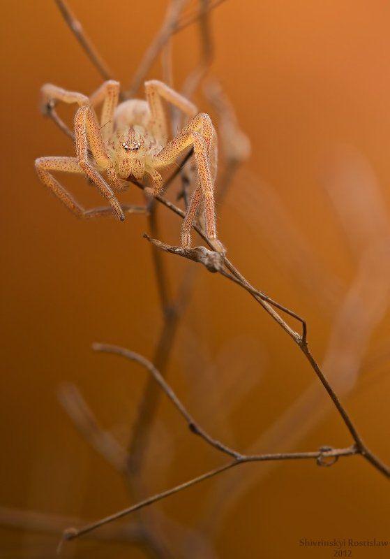 ростислав, макро, 150мм Поздняя осеньphoto preview