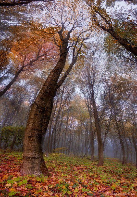 дерево богатырьphoto preview