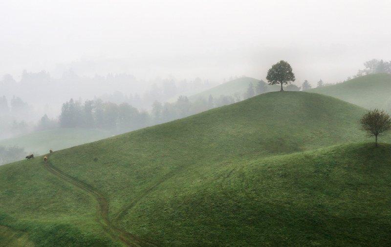 швейцария, альпы, туман Туманное утроphoto preview