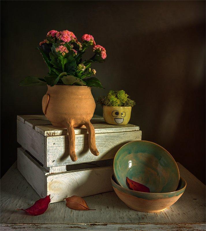 still life, натюрморт,  цветы,  каланхоэ, мох, ящик, лисья, миска, керамика, веселый натюрмортphoto preview