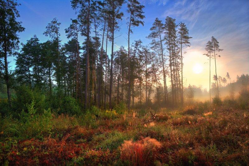 лето, рассвет, лес, туман, Рассвет в августеphoto preview