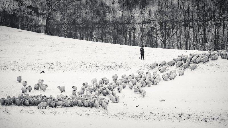 dream,landscape,alexandrucrisan,nature,scenery,countryside,far,away,romania,dreamland,magic,sound,lonely,mountain,myromania,forest,trees,winds,hill,tree,white,poem,haiku,minimalism,minimal,winterscape,fence,sheep,shepherd,wolf,disguised Still countingphoto preview