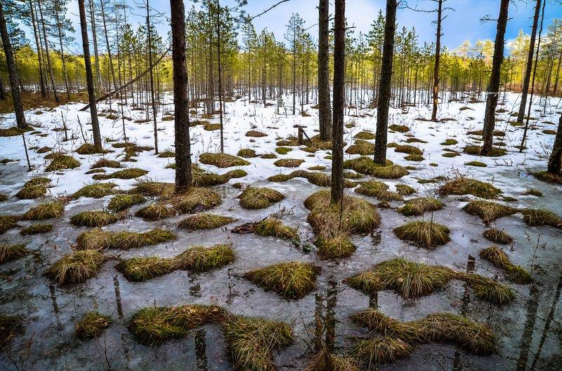весна, болото, ленобласть, заповедник, заказник, красиво, снег, Сестрорецкое болото.photo preview