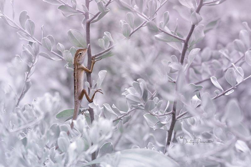 природа, животные, птицы, вьетнам, остров фукок Охотницаphoto preview