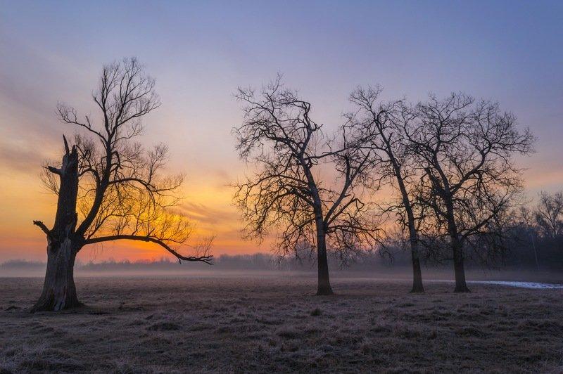 рассвет,утро,весна,дерево,туман,фотография,фотограф ,сергей корнев,пейзаж,природа,композиция,колорит,цвет,свет,украина,гадяч Трое против одногоphoto preview