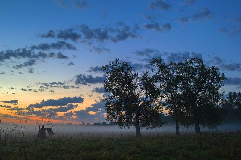 утро,пейзаж,природа,облако,небо,дерево,перед рассветом,туман,дымка,украина,гадяч,сергей корнев,композиция,фотография,фотограф,фотография природы,красота. Предрассветное состояниеphoto preview