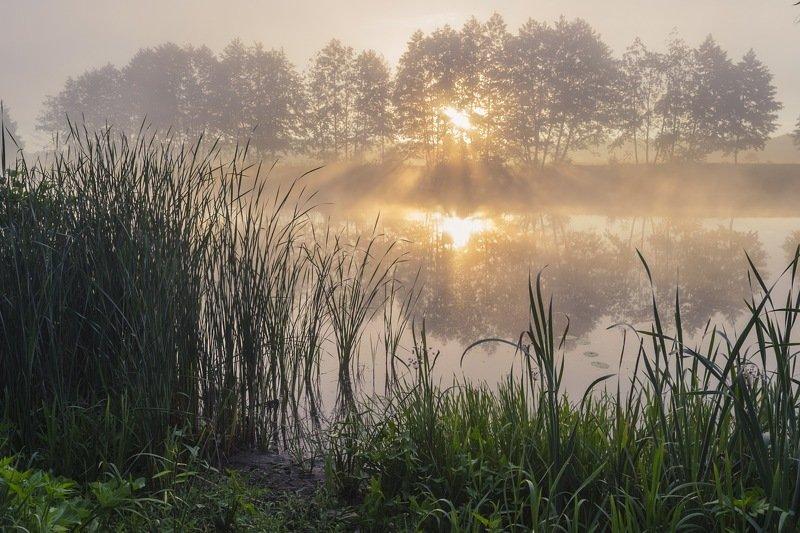 весна,паводок,утро,рассвет,пейзаж,природа,дерево,украина,гадяч,сергей корнев,красота,фотограф,пейзажная фотография,колорит,искусство,композиция Пламя разгораетсяphoto preview