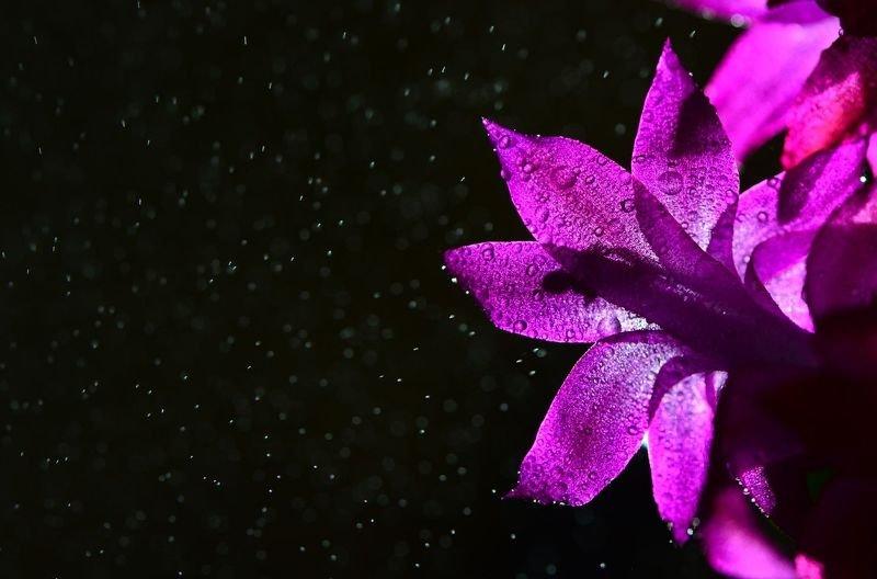 цветы, макросъемка Ночной цветокphoto preview