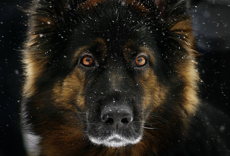 Собака и снегphoto preview