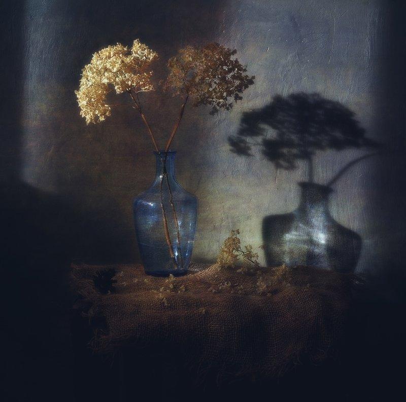 натюрморт,still_life,тень,гортензия зимний луч... фото превью