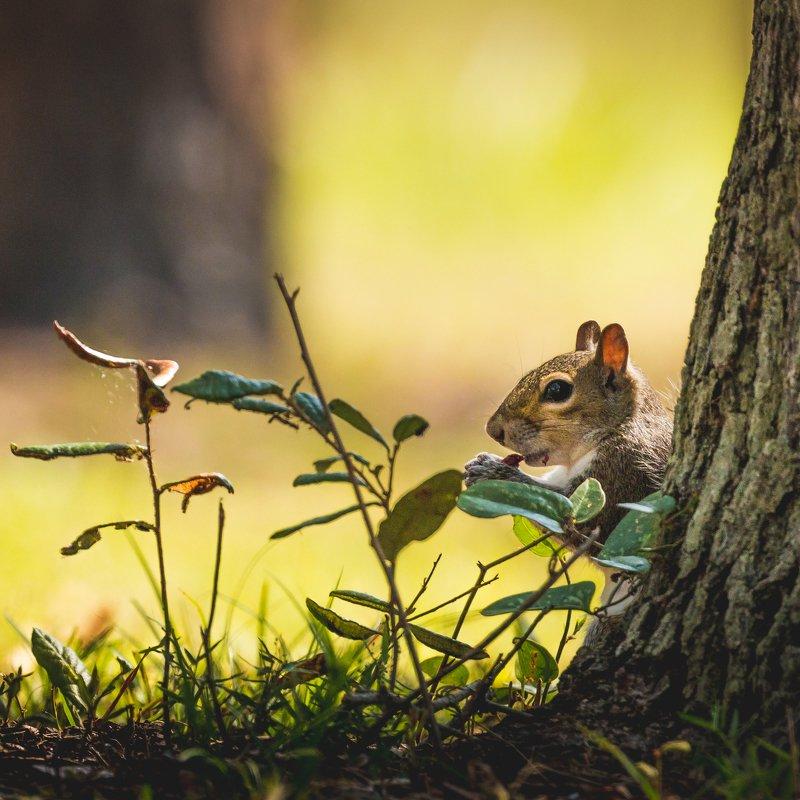 A Squirrelphoto preview