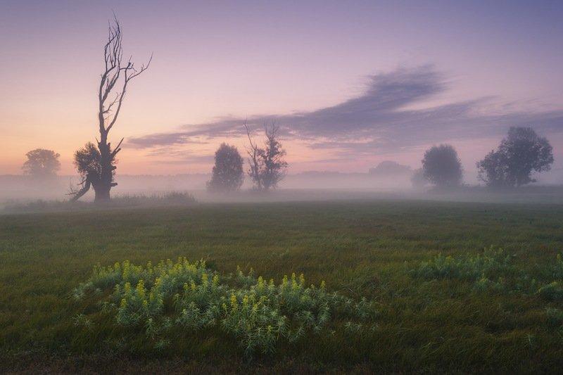 пейзаж,утро,лето,рассвет,туман,дерево,поле,луг,украина,гадяч,сергей корнев,композиция,искусство,фотография,фотограф,дымка Ожидание солнцаphoto preview