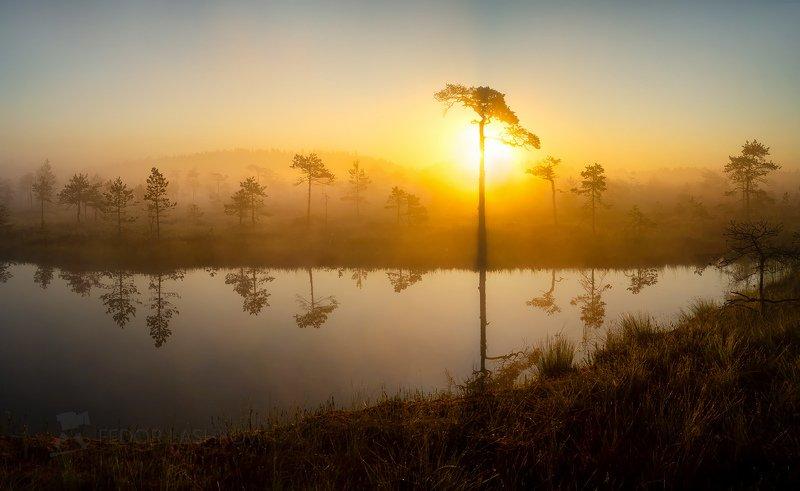 ленинградская область, рассвет, солнце, лето, тепло, сосна, болото, водоём, покой, штиль, туман, отражение, деревья, берег, оранжевый, Африканский мотивphoto preview