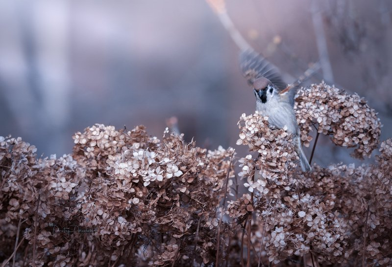 природа, лес, животные, птицы Танец на зимних цветахphoto preview