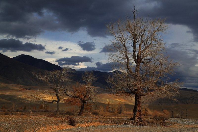 осень горы небо дерево  тополя Чаган-Узунаphoto preview