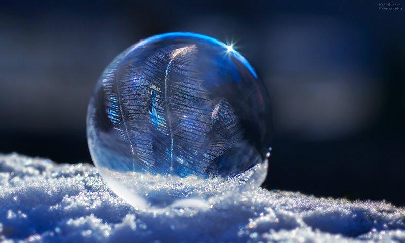 макро, природа, зима, снег, лед, мыльные пузыри, macro, nature, winter, snow, ice, soap bubbles, Морозные узорыphoto preview
