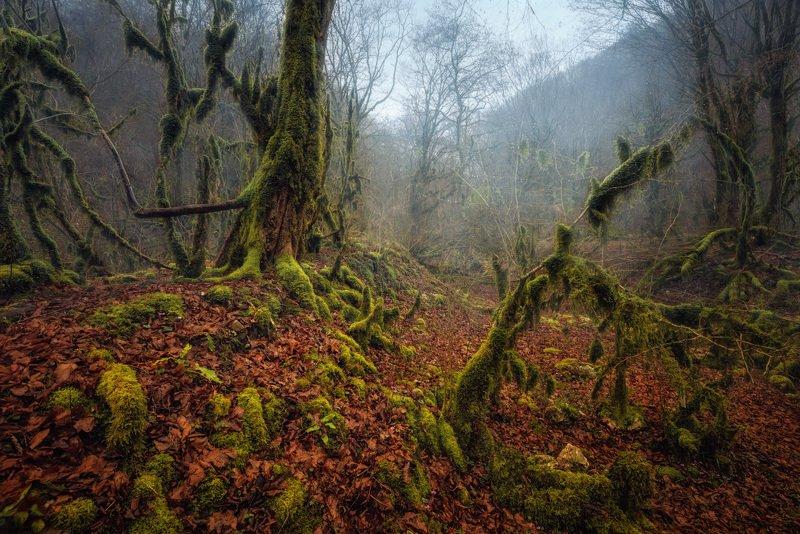 Лес, Деревья, Мох, Листья, Абхазия Тропами лешегоphoto preview
