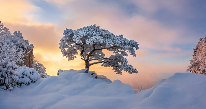 mountains,peak,hiking,winter,light,snow,cold,pine,tree,alone Cold lonerphoto preview