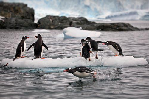 Пингвиньи истории - 5