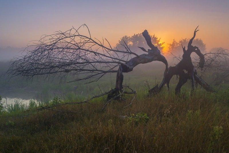 рассвет,пейзаж,туман,колорит,композиция,искусство,сергей корнев,украина,гадяч,фотография,фотограф,красота,пейзаж,природа Битва на рассветеphoto preview