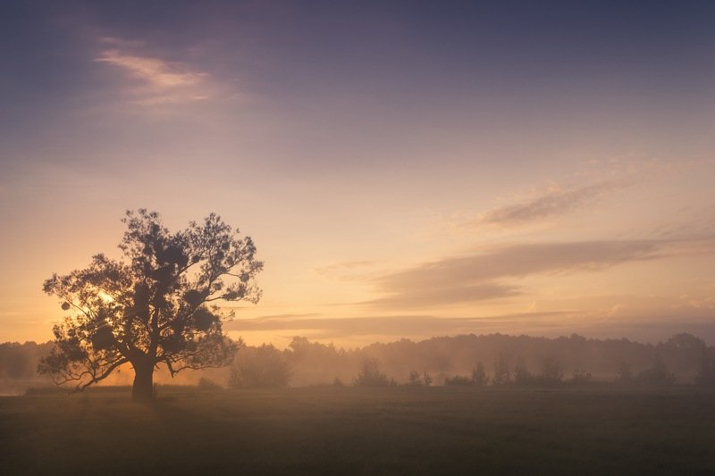 рассвет,весна,утро,дерево,пейзаж,природа,фотография,фотограф,украина,гадяч,сергей корнев,свет,облако,композиция,искусство Встречающий рассветphoto preview