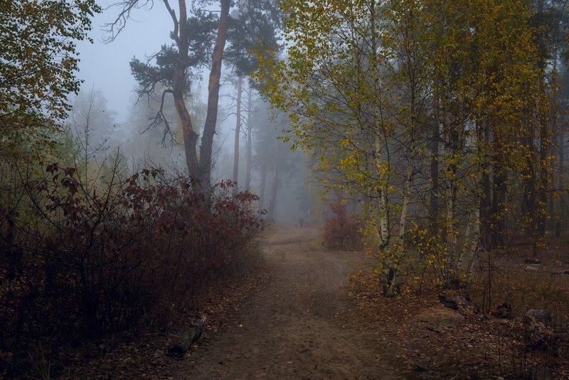 лес, осень, октябрь, , туман Под кровлей синего туманаphoto preview