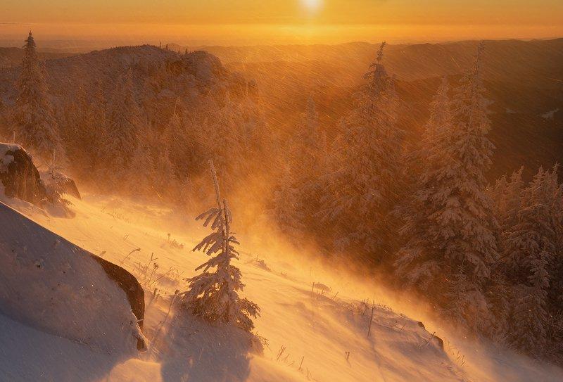 winter, trees, blizzard, snow, landscape, travel, nature, mountain, romania, cold, sunrise Crazy Blizzardphoto preview