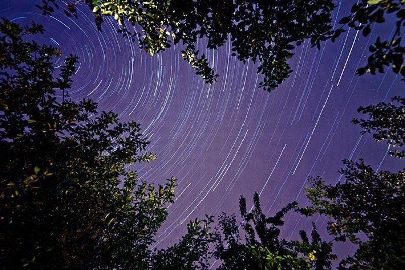 Ночью в саду...photo preview